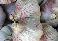 garlic, immune booster