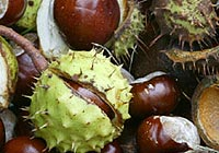 horse chestnut, skin care
